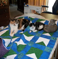 Kitties Quilt